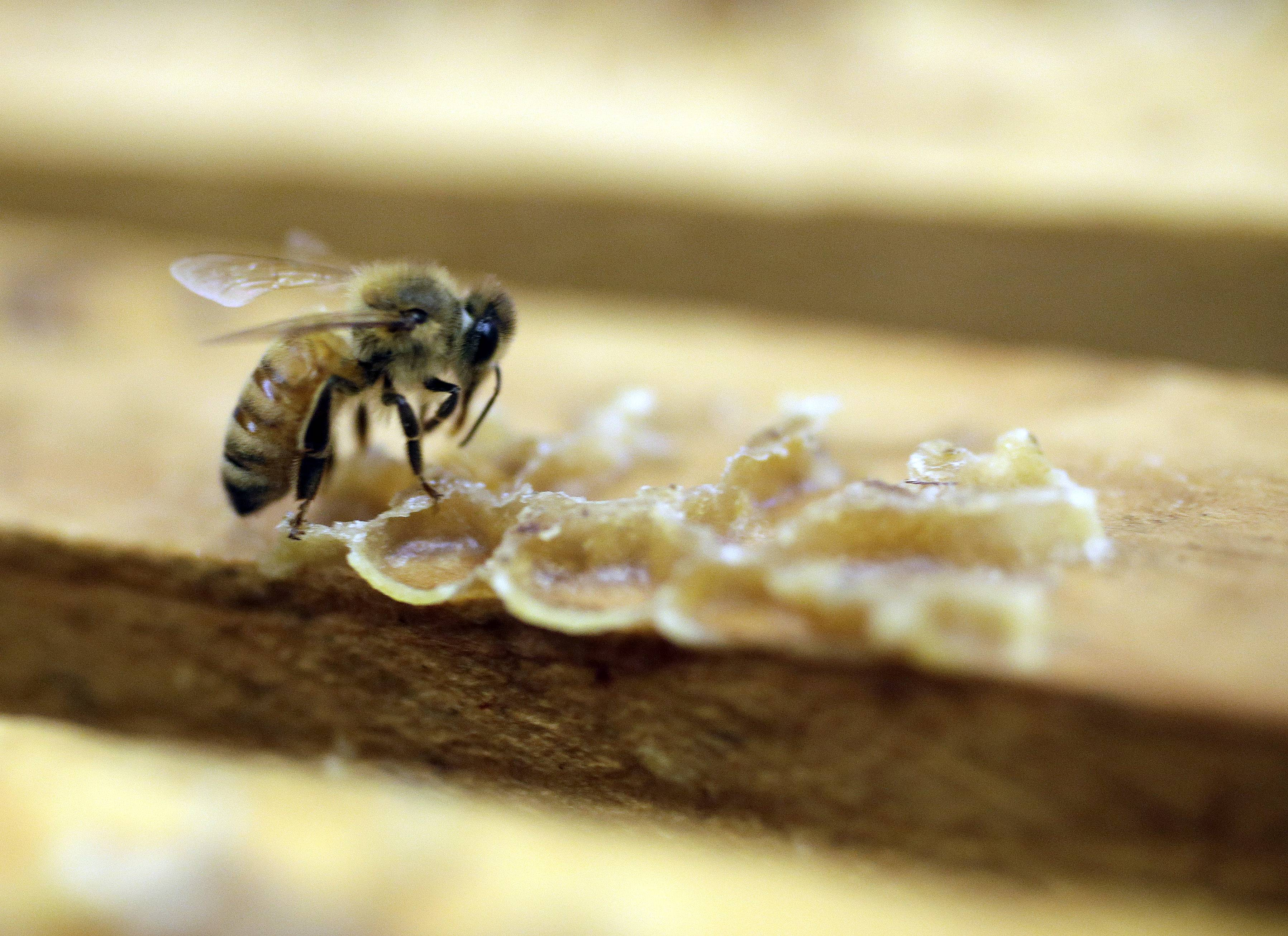 California's record drought hasn't been sweet to honeybees, and it's creating a sticky situation for beekeepers and honey buyers.