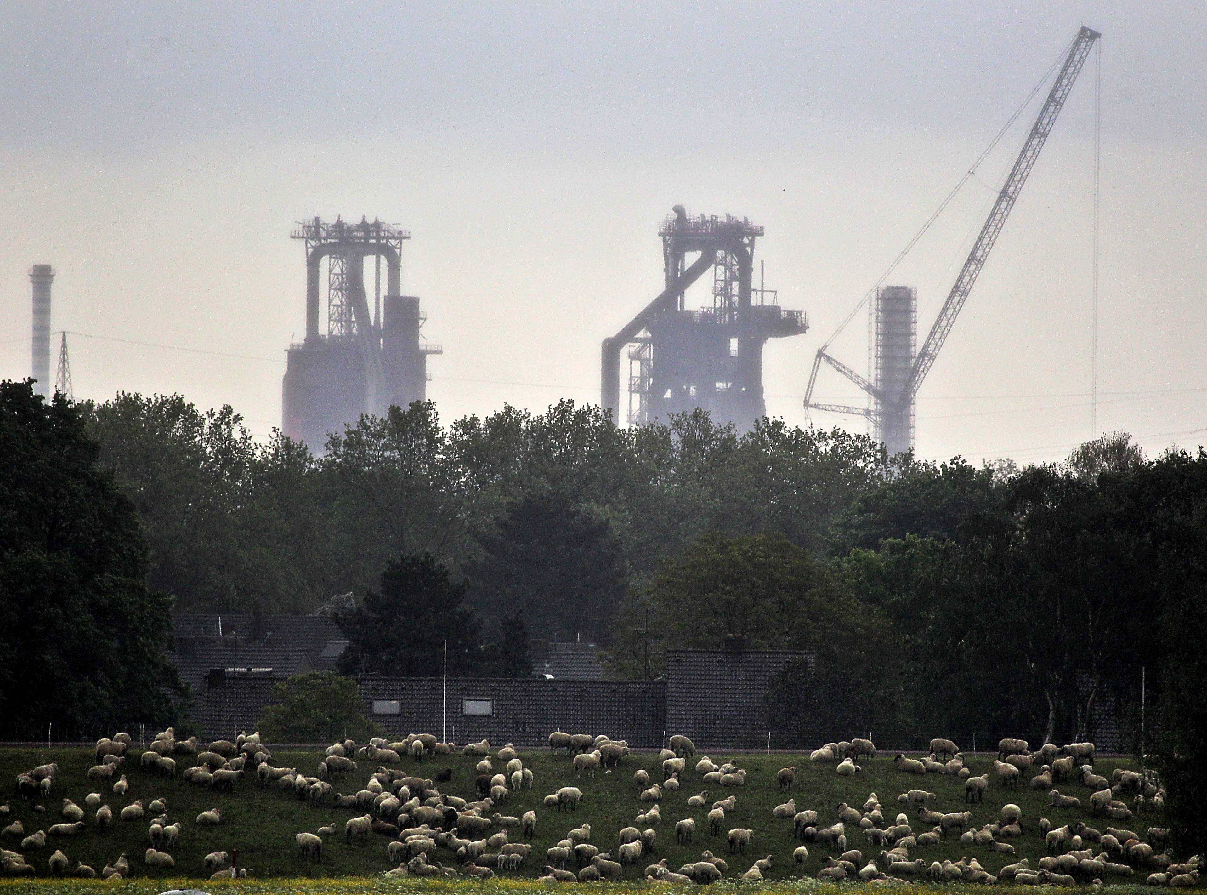 Sheep graze in front of furnaces in Duisburg, Germany. The shaky economic recovery in the 18-country eurozone ground to a halt in the second quarter amid fears over the crisis in Ukraine and softer trade and investment.
