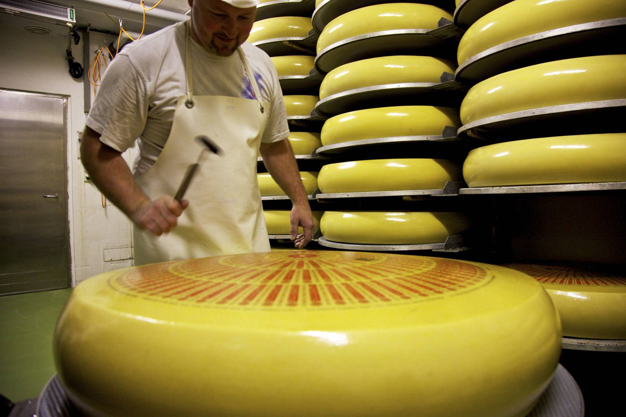An employee tests a whole Emmentaler Switzerland AOC cheese for holes in the salting cellar at the Hupfenboden dairy in Trubschachen,  Switzerland,  in 2011. Since Vladimir Putinís government banned many food imports from nations supporting sanctions due to the countryís role in the Ukraine crisis, neutral Switzerland finds itself with an edge in selling cheese to 142.5 million Russians.