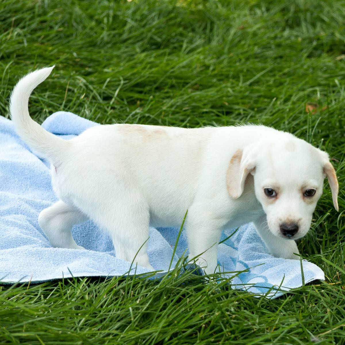 Justine is a female, 10-week-old beagle mix, who weighs about four pounds.