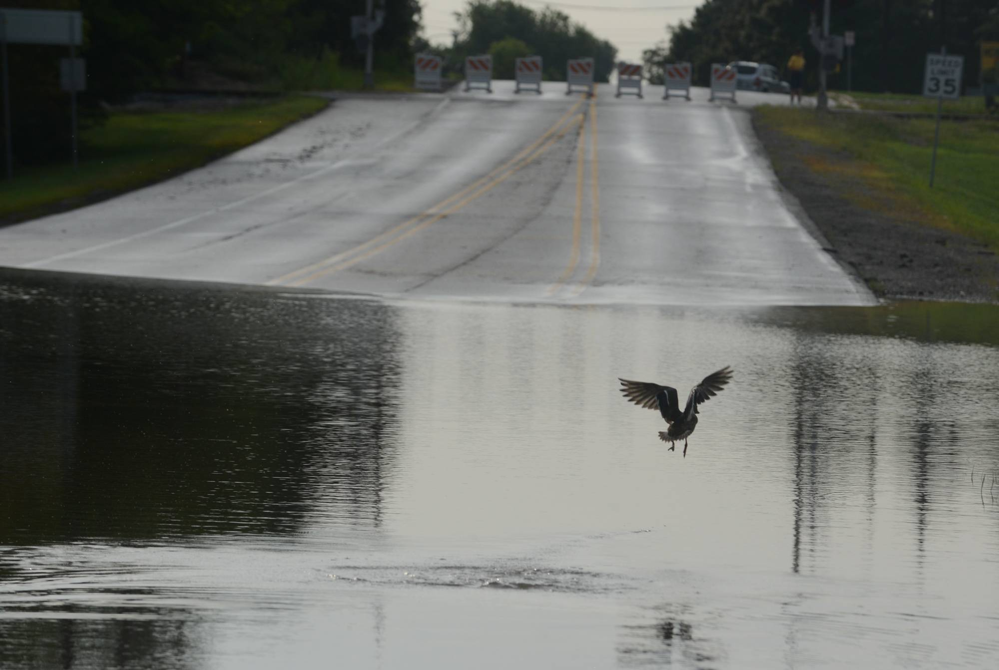A duck was the only thing getting through the floodwaters on Irving Park Road near the Schaumburg Airport in Schaumburg on Friday morning. Heavy overnight rain closed the road to vehicles.