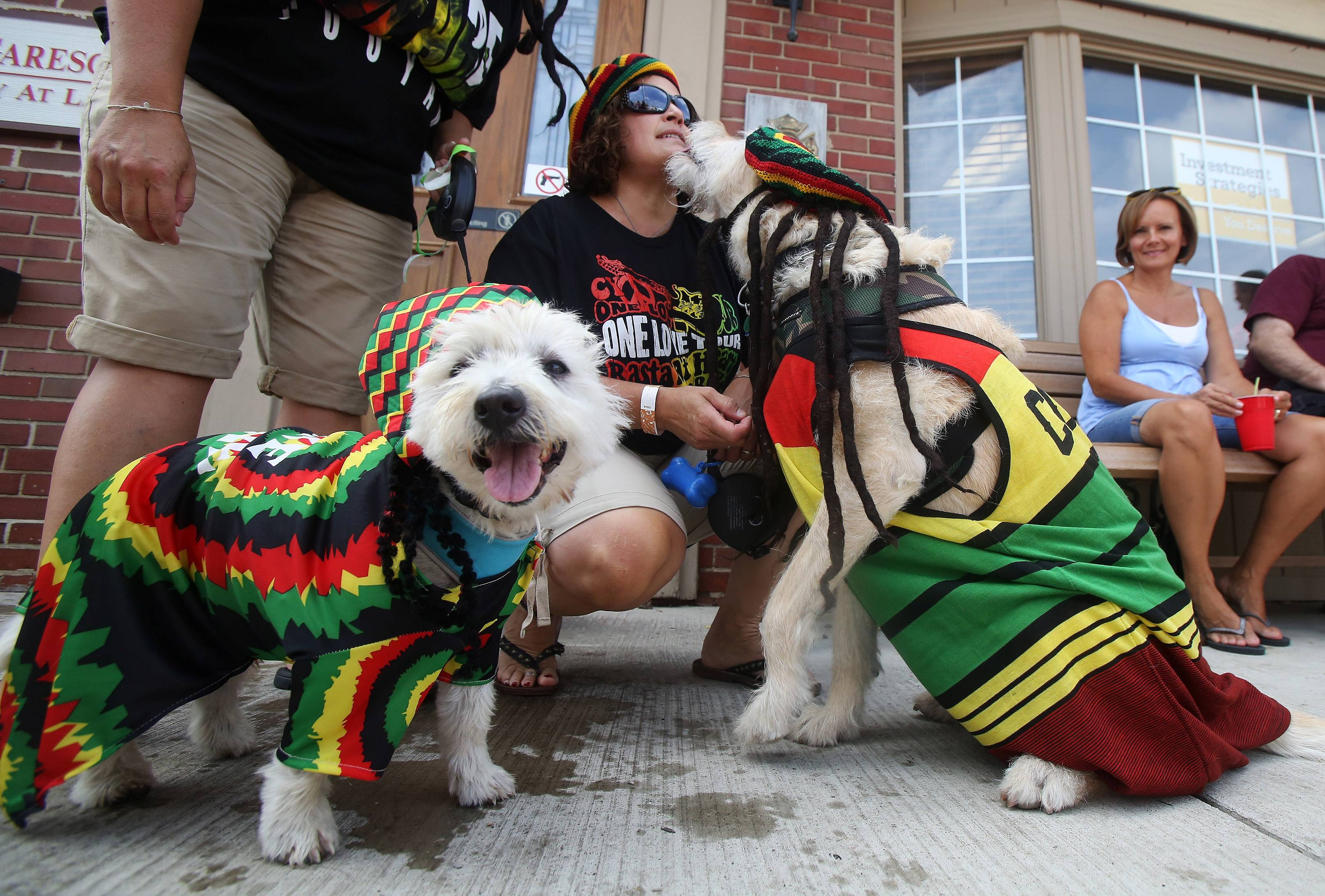 Nicolle Carfagnini of Palatine receives a kiss from Comiskey as Reggie, left, watches the crowd during the annual Sweet Pea Pet Parade Sunday in downtown Palatine. The group was dressed as part of the Bob Marley band for the parade. More than 70 pets participated in the parade.