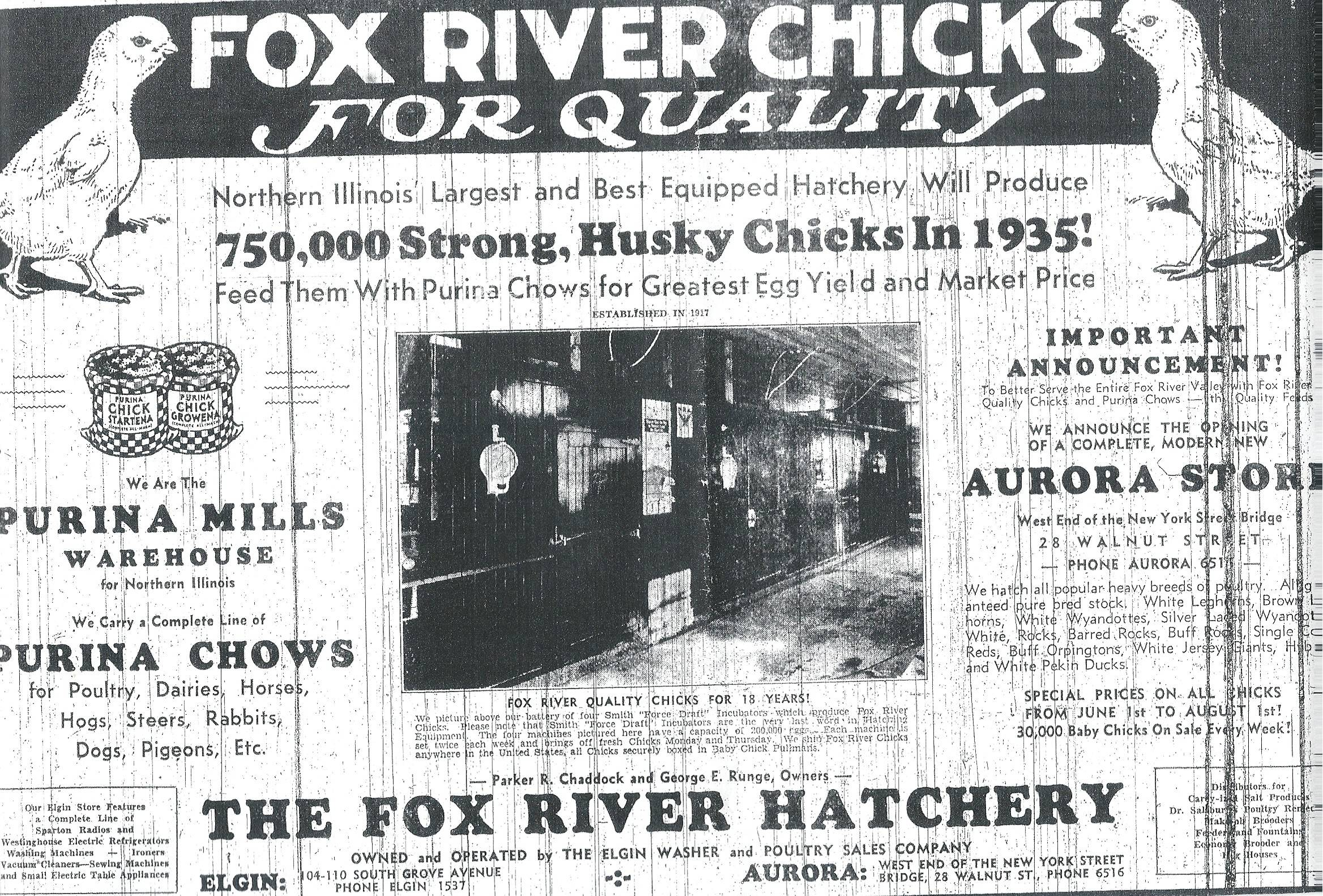 A 1935 ad from the Fox Valley Hatchery shows raising chicks was big business in Elgin.