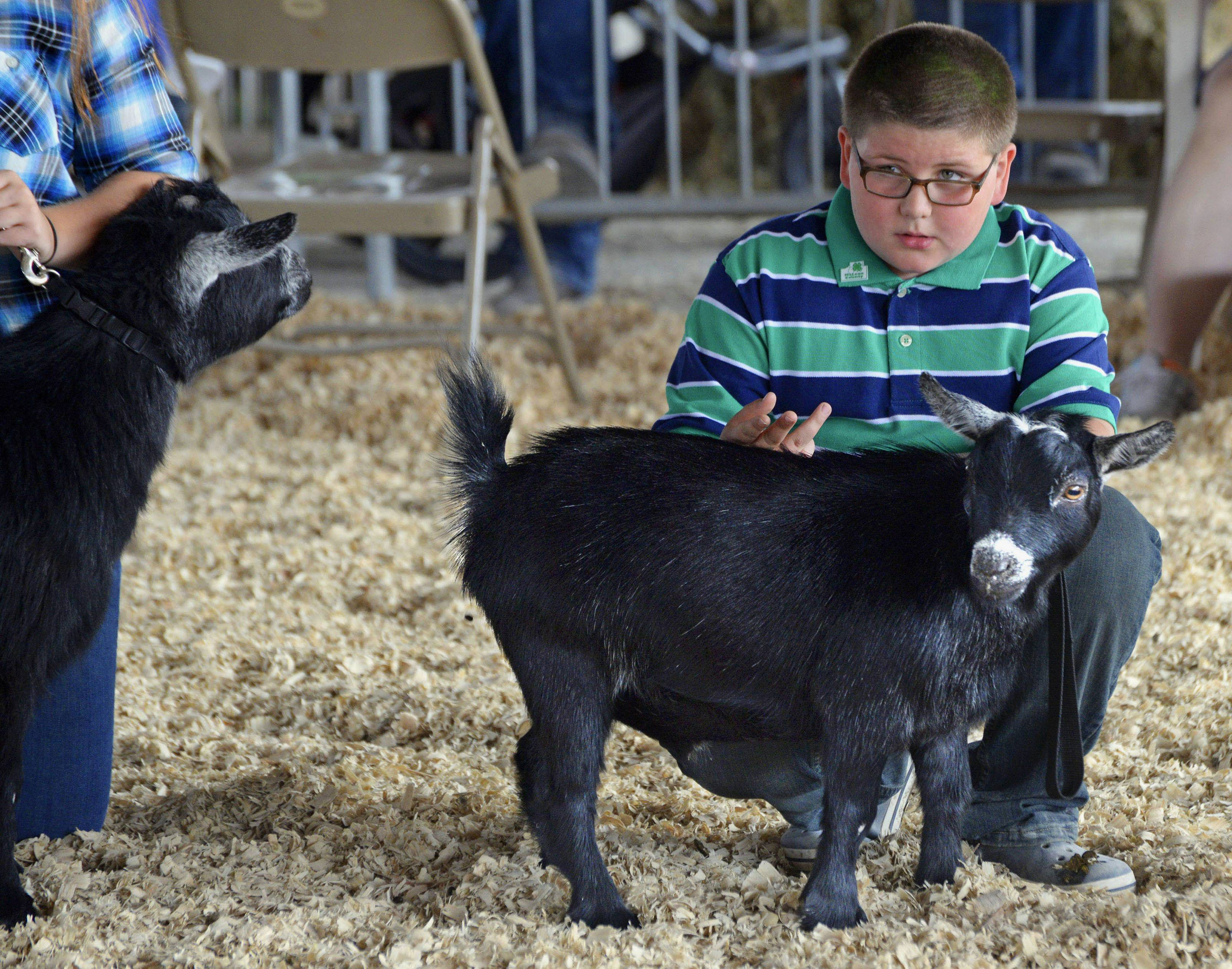 A.J. Hepner, 10, of Colfax, watches for directions from a judge while showing a pygmy goat at the McLean County Fair in Bloomington.
