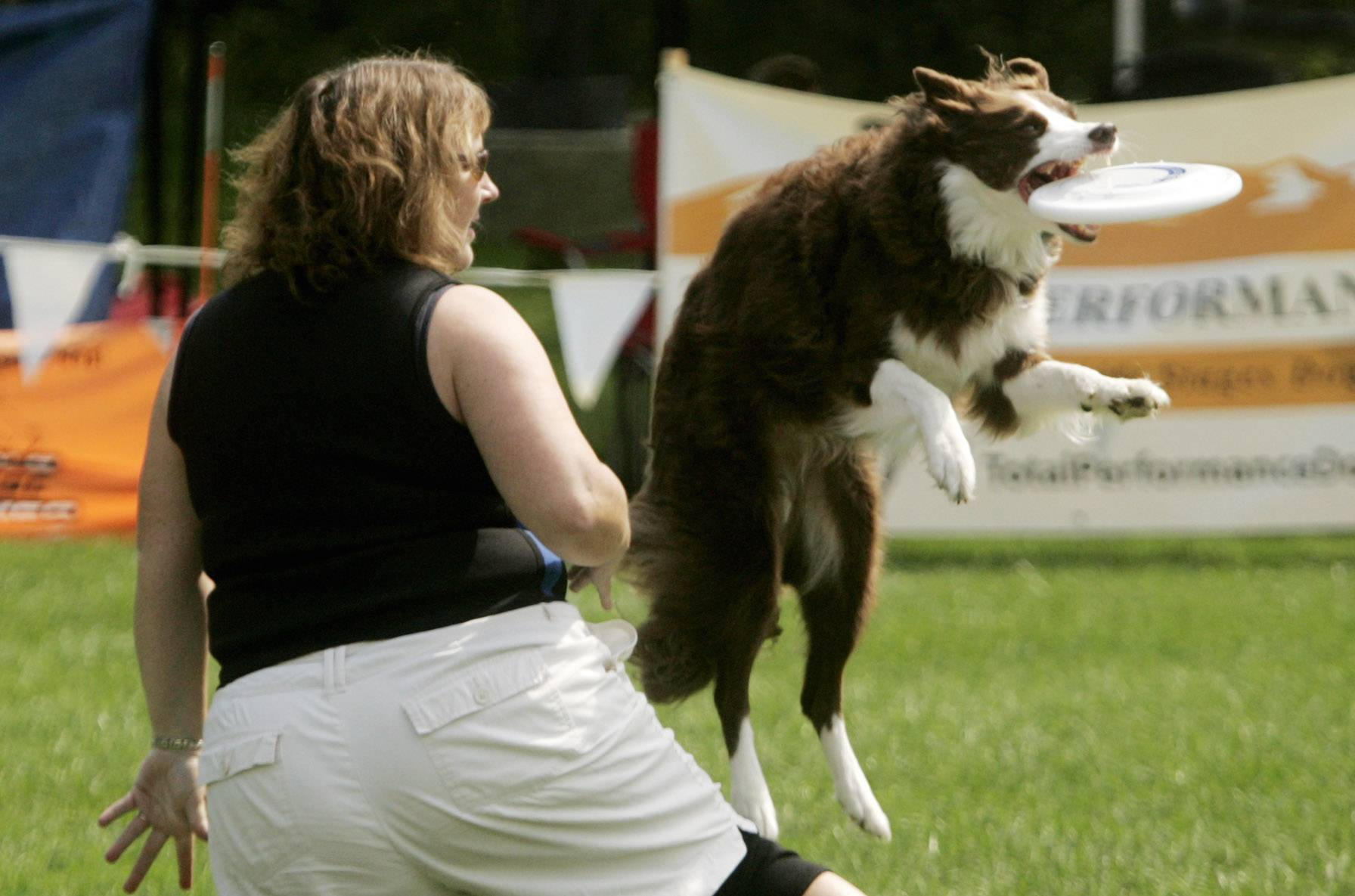 The Ashley Whippet Championships of dog disc competitions are a part of the Last Fling festival in Naperville from 9:30 a.m. to 4:30 p.m. Saturday at the Riverwalk Grand Pavilion west of Centennial Beach.