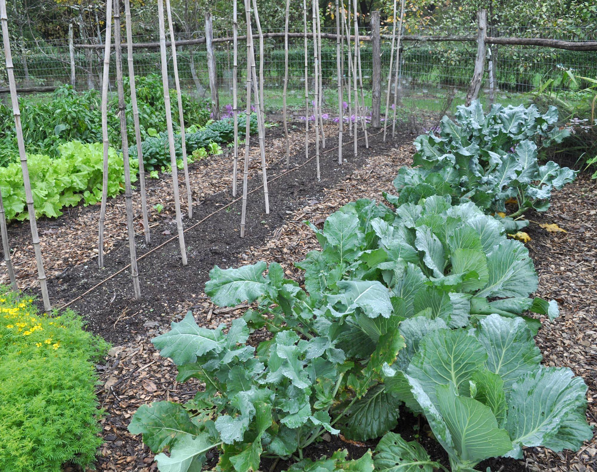 Growing fall vegetables is like having a whole other growing season in the garden. Cool weather brings out the best flavor from vegetables such as kale, broccoli, and carrots. And the harvest season is long; fall vegetables just sit pretty, awaiting harvest at your leisure.