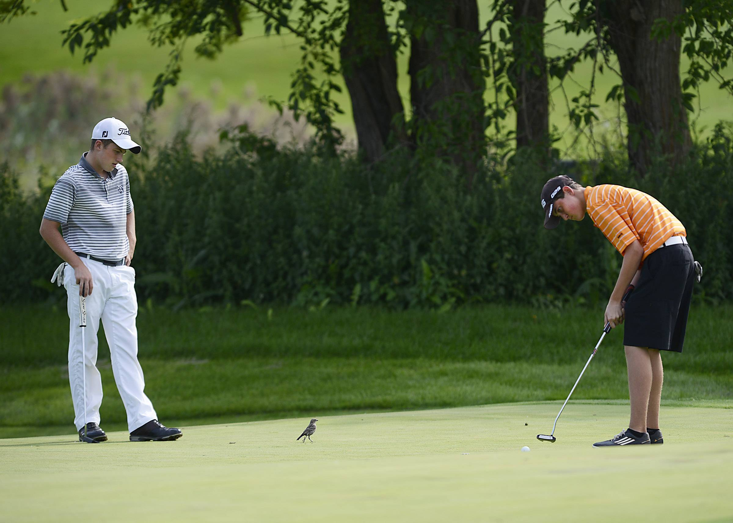 Kaneland's Jake Head watches a sparrow scamper across the green while St. Charles East's Daniel Haugen putts Thursday at the Geneva boys golf invitational at Mill Creek Golf Club.
