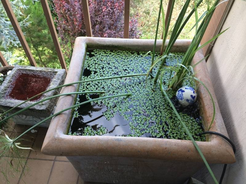 Even a small patio can have a fish pond for Container ponds with fish