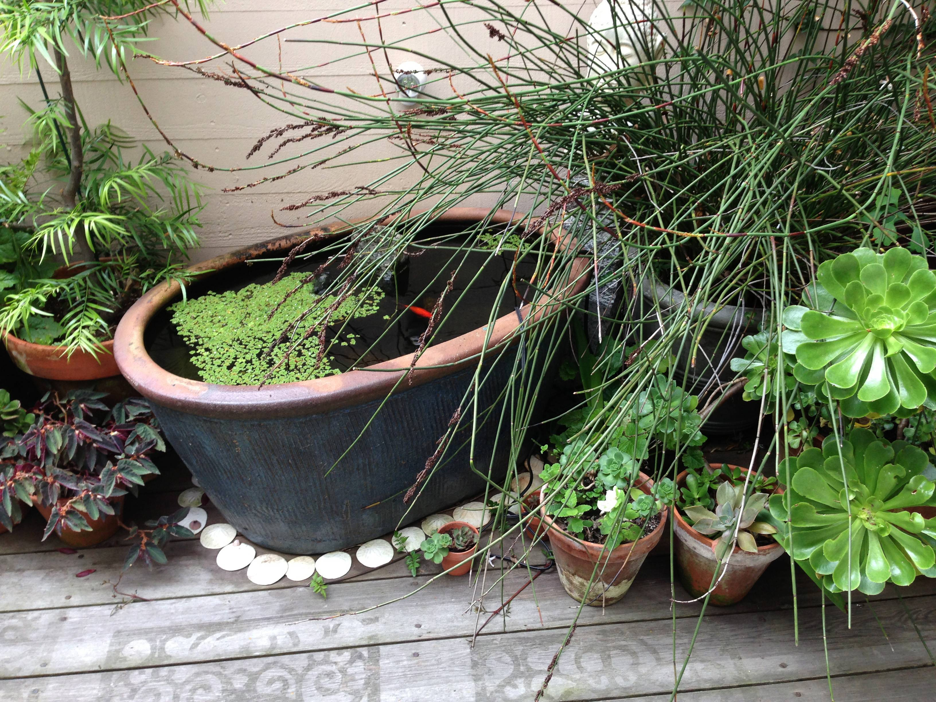 A planter can be used to put together a simple yet relaxing container pond for your porch or patio.