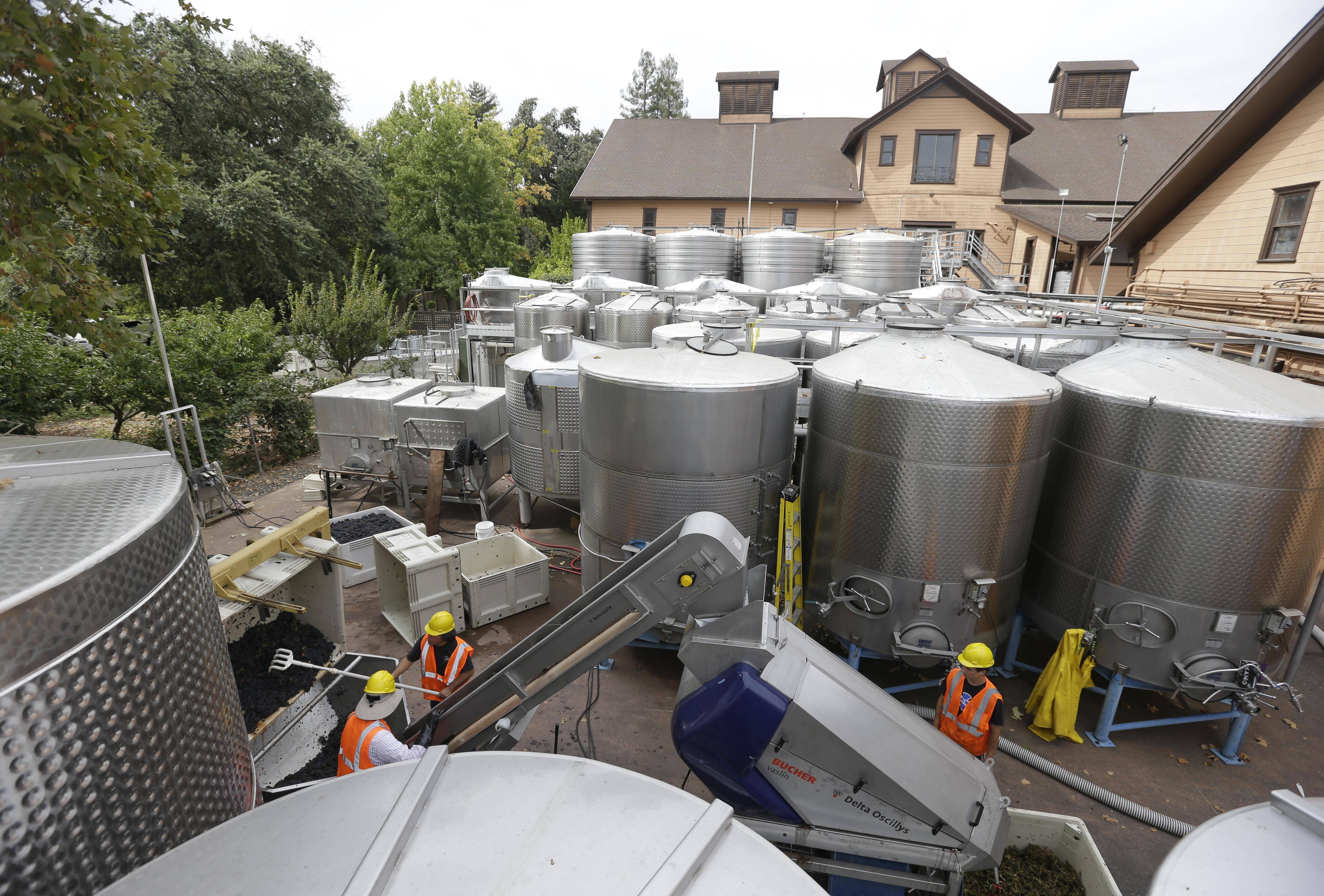Workers sort Pinot Noir grapes Friday with the earthquake damaged historic winery building dating from 1886 in the background at Trefethen Family Vineyards in Napa, Calif. Harvest resumed at the winery on Friday in addition to the arrival of crews to shore up the leaning historic building.