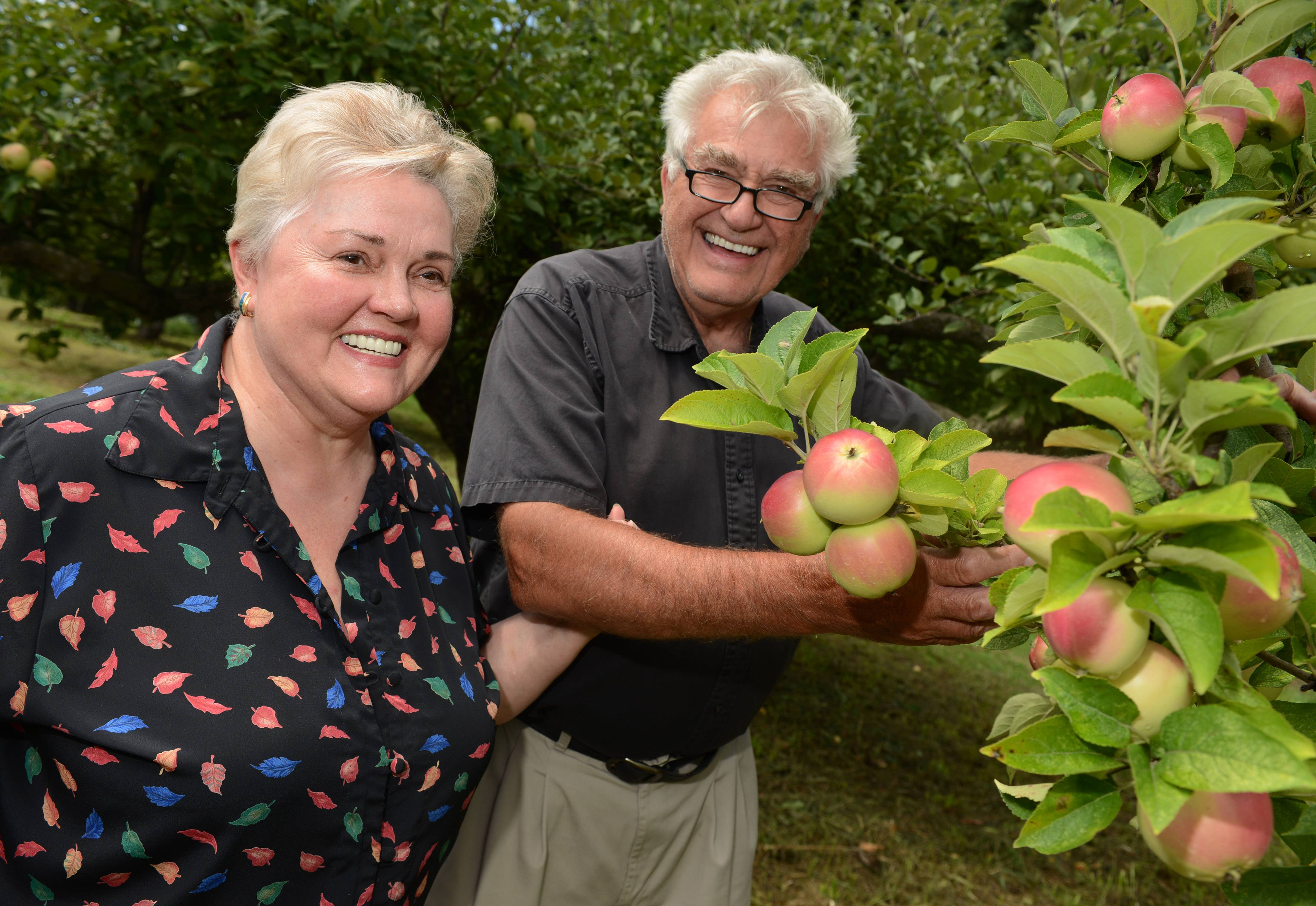 Helga and Josef Ziegler show off a new variety of Winter Banana apples at their Ziegler's Apple Orchard in Grayslake.