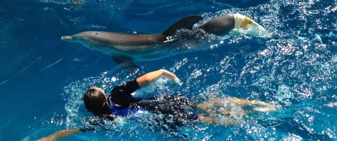 "Living her dream, Mallory Mara swims with Winter, the dolphin whose story of rehabbing with a prosthetic tale was made into the movie, ""Dolphin Tale."" As a trainer at Clearwater Marine Aquarium in Florida, the Elk Grove Village native also works with Hope, the star of ""Dolphin Tale 2."""