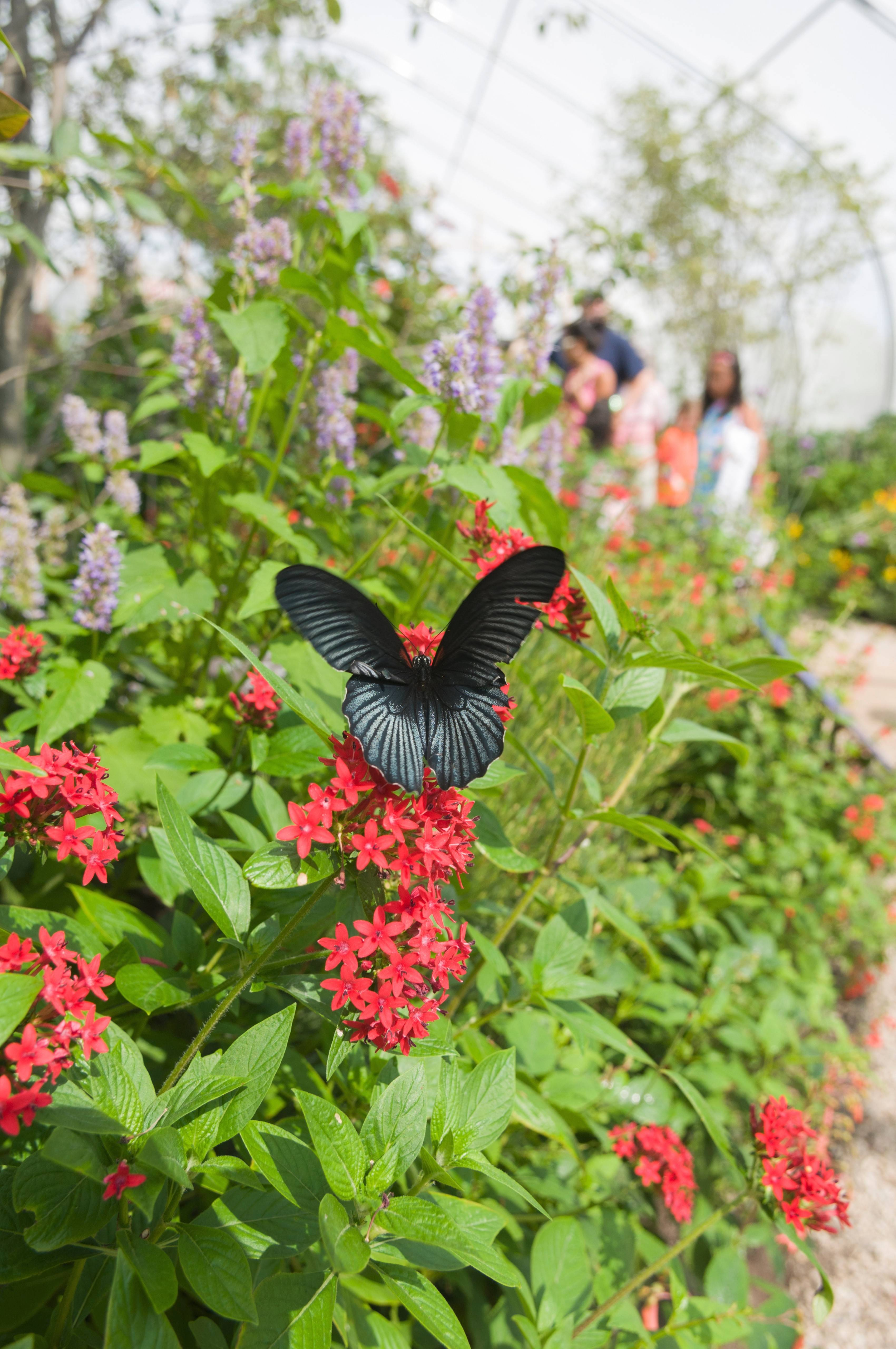 The seasonal exhibit Butterflies and Blooms at the Chicago Botanic Garden in Glencoe concludes on Monday, Sept. 1.