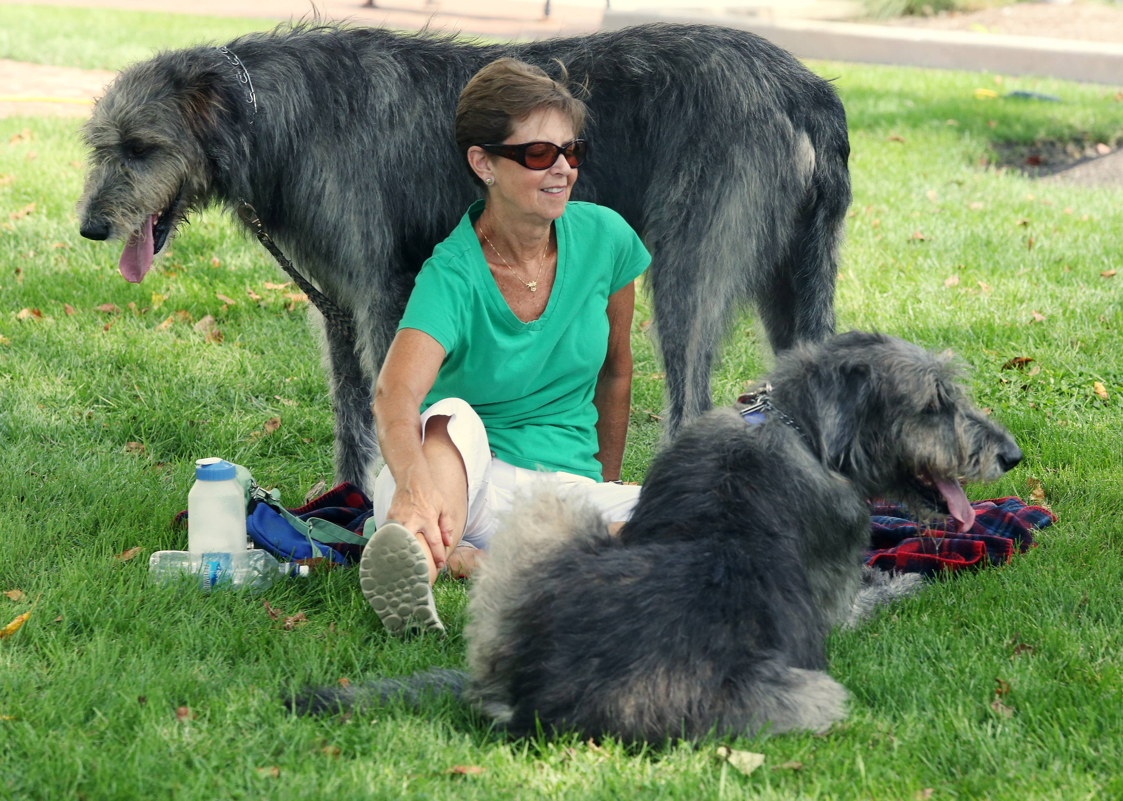 Gail Ryan of Geneva sits with her Irish Wolfhounds, Callie and Shealan, as they listen to Irish music Sunday during the Long Grove Irish Days Festival Sunday in the village's historic downtown. The festival featured live music, Irish dancers, a men-in-kilts competition and more.