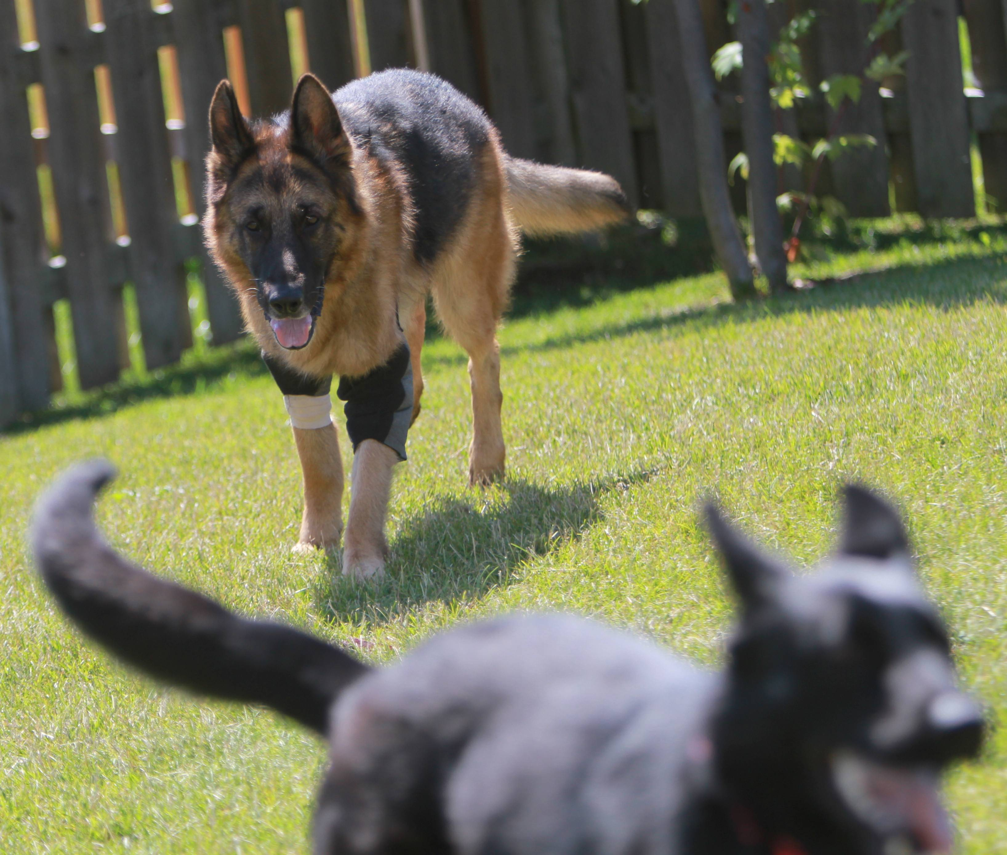 Shane, chasing Talia, retired after nine years on the Gurnee police force due to issues with his elbows, including arthritis and skin infections.