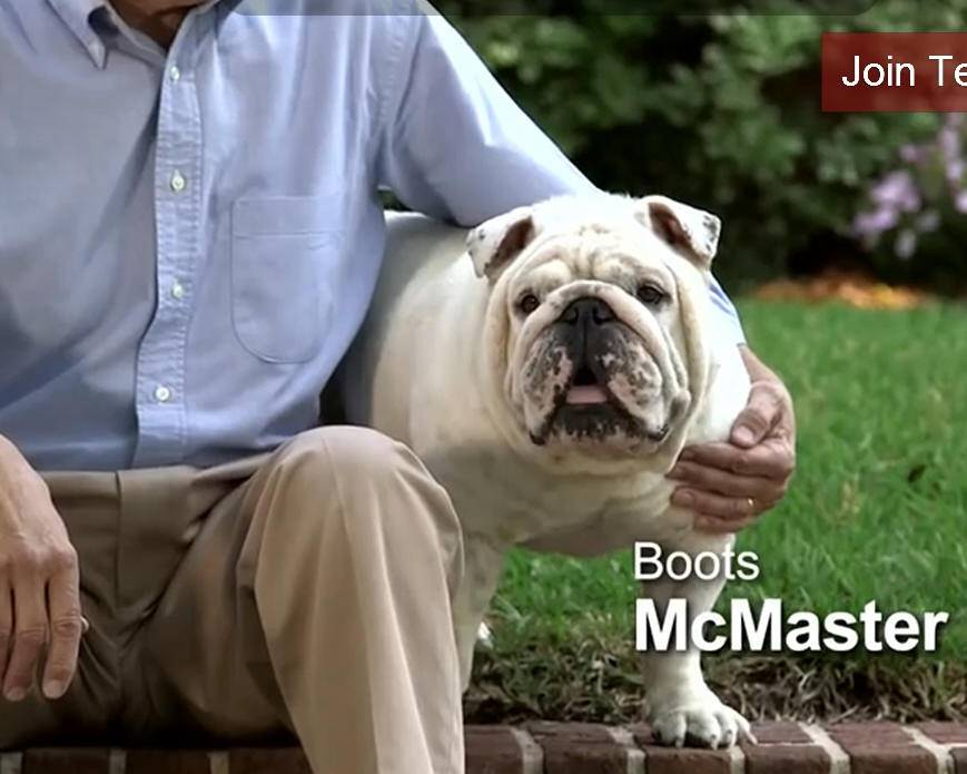 This political ad shows Boots McMaster, the bulldog owned by Henry McMaster, who is running for South Carolina lieutenant governor. With dogs in almost half of American homes, a number of South Carolina political candidates this year are featuring the family pet dog in ads, on web sites and on Facebook pages.