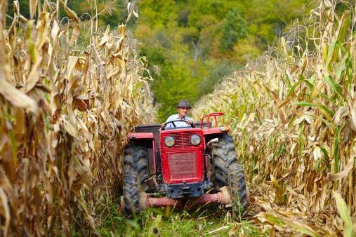 Some Illinois farmers say this year's corn harvest could be later -- and more expensive -- than usual.