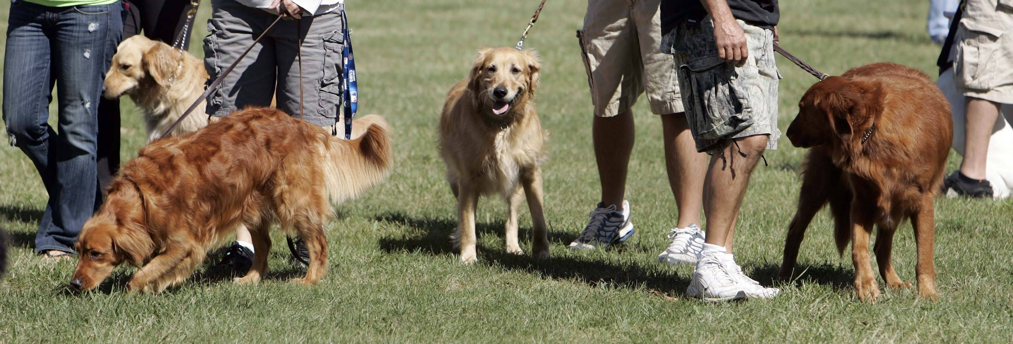 Hundreds of dogs and their owners are expected to attend Dog Days of Dundee at Randall Oaks Park in West Dundee. The event runs from 11 a.m. to 3 p.m. Saturday, Sept. 6.