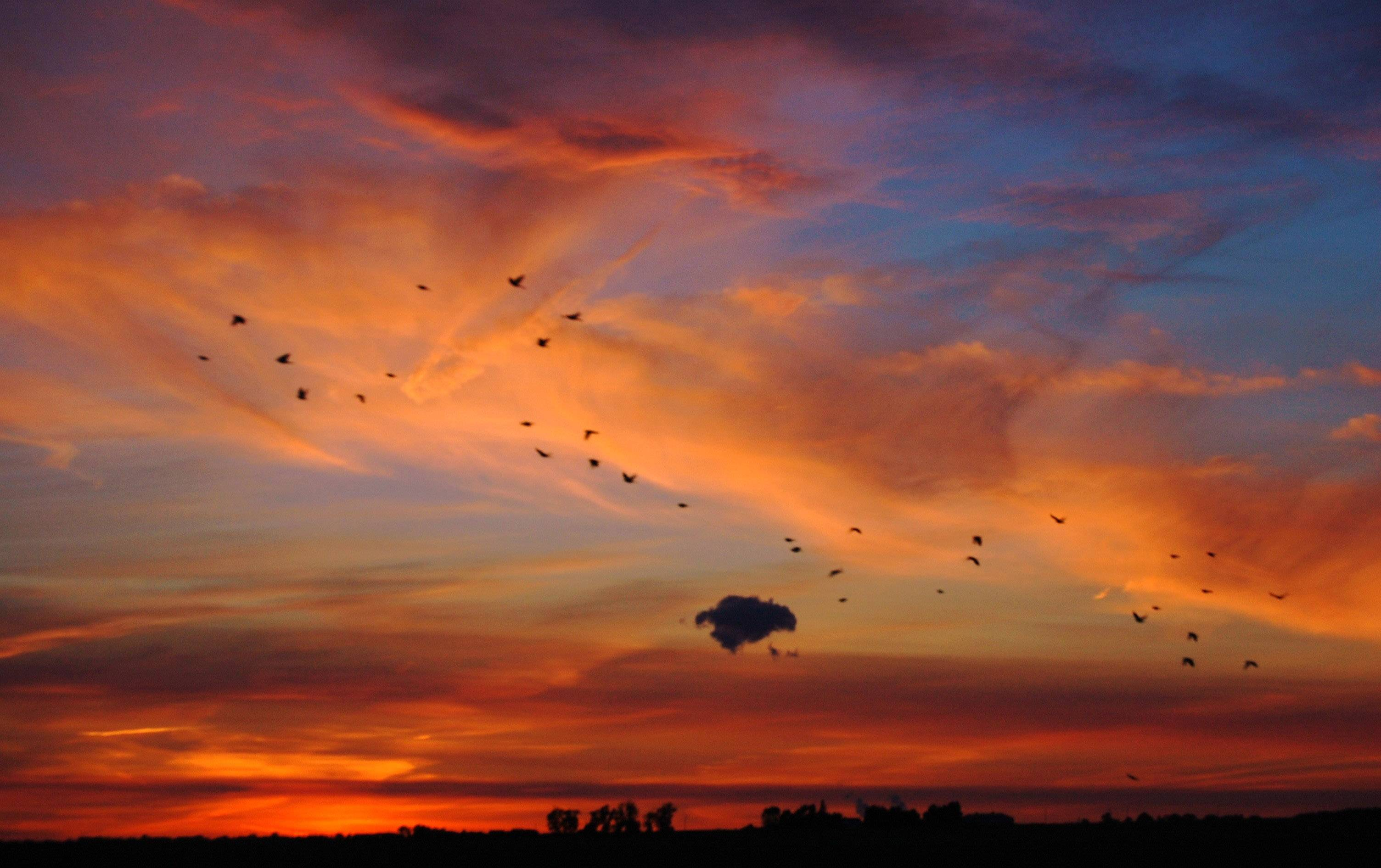 The sunsets in bold colors when all of a sudden a flock of birds flew by near Highway 88W in Dixon, Illinois on August 15.