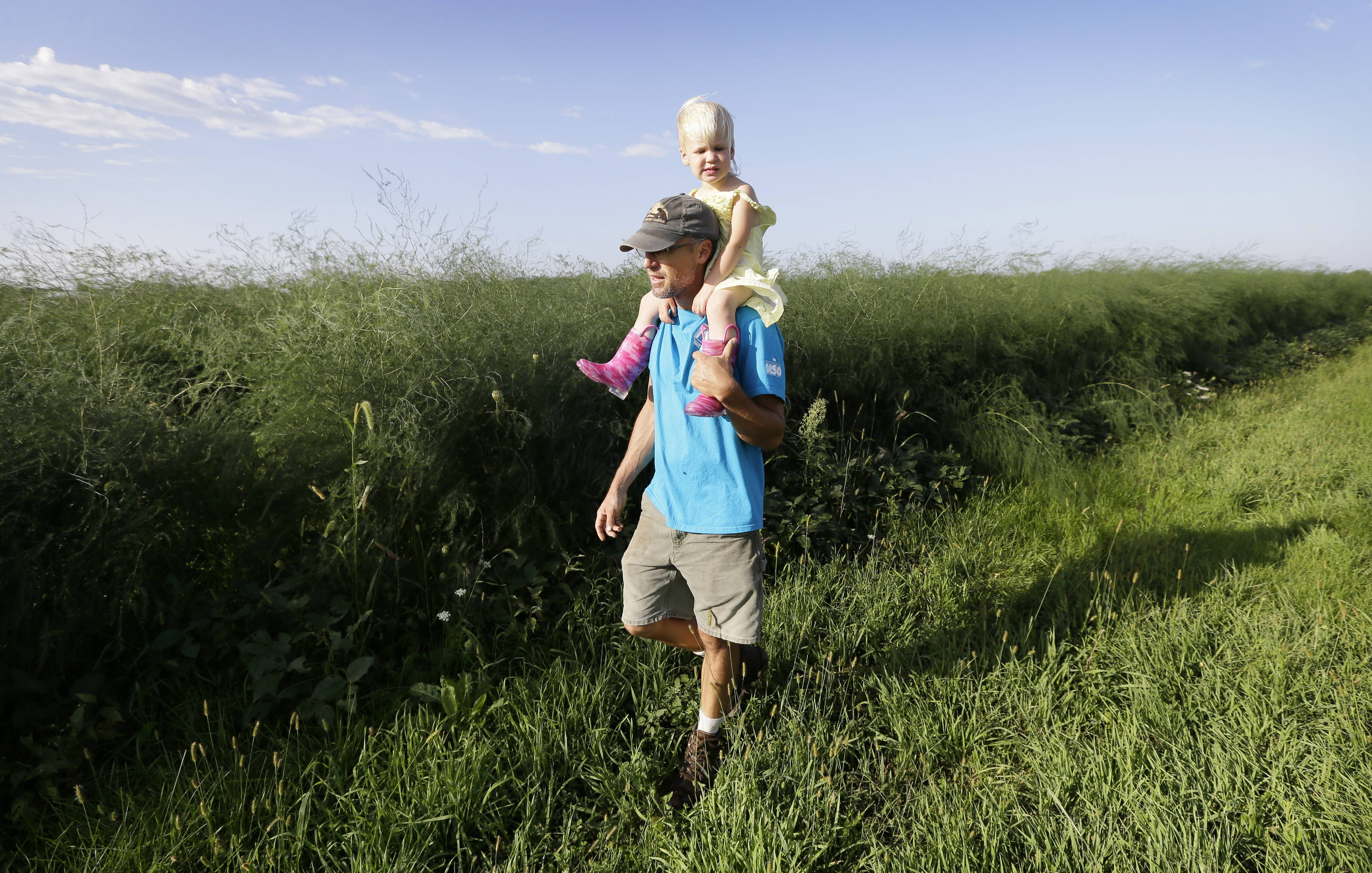 Andrew Dunham and his 2-year old daughter Leonora walk near asparagus plants Thursday on his farm, in Grinnell, Iowa.