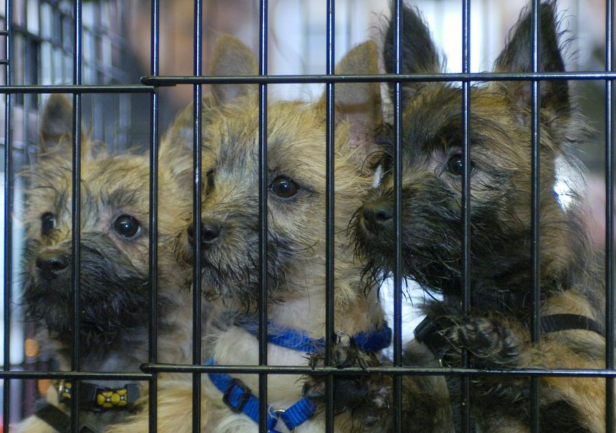 Editorial: Listening to all, towns can keep puppy mills out