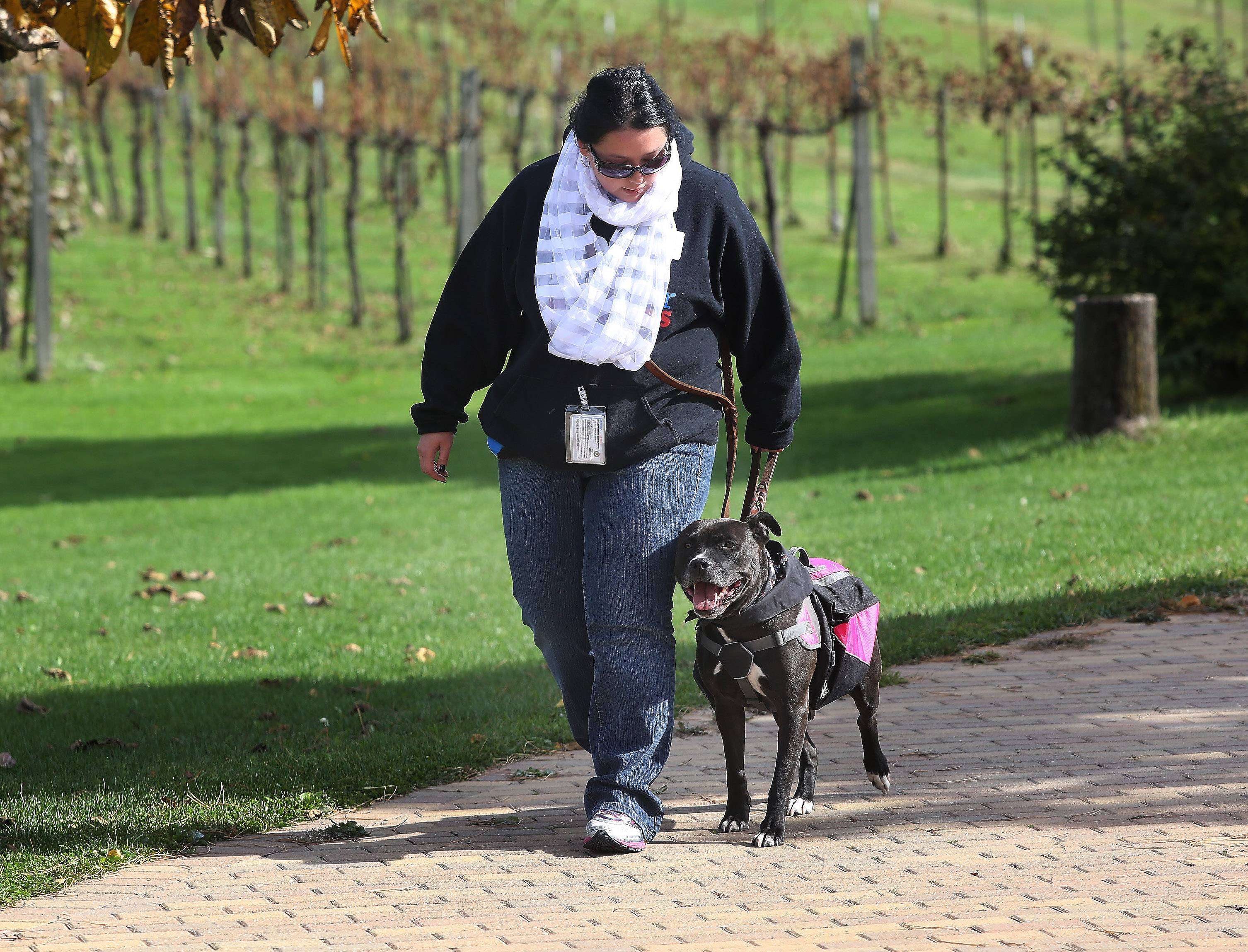 Lori Ogawa of Hanover Park walks with pit bull Sheena during the 2nd annual Pinot with Pits for Patriots at Valentino's Vineyards in Long Grove. The event Sunday raised funds to help with costs of training rescued pit bulls to become service dogs for veterans and first responders.