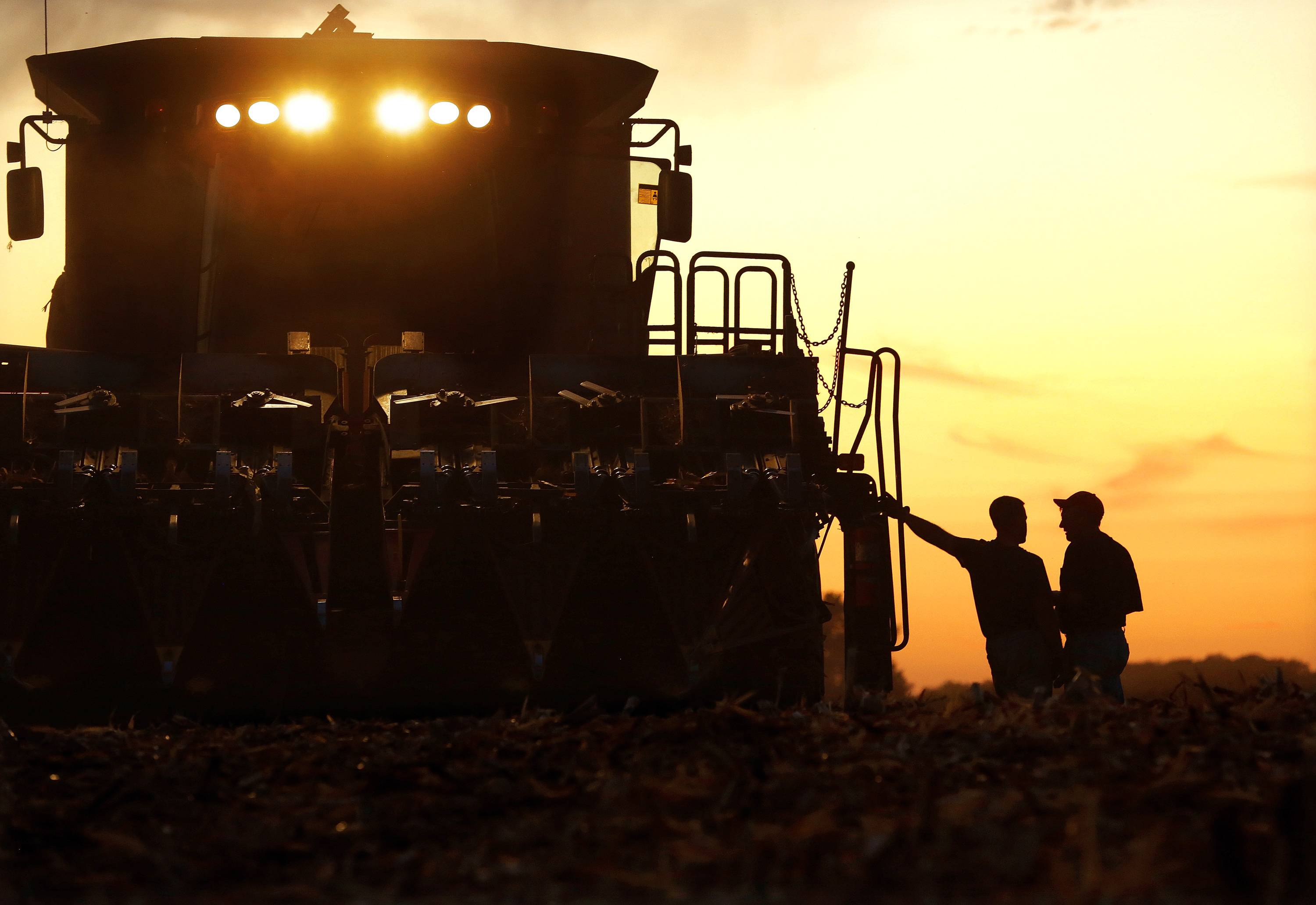 Central Illinois corn farmers are silhouetted against the setting sun while harvesting this year's crop of corn in Pleasant Plains.