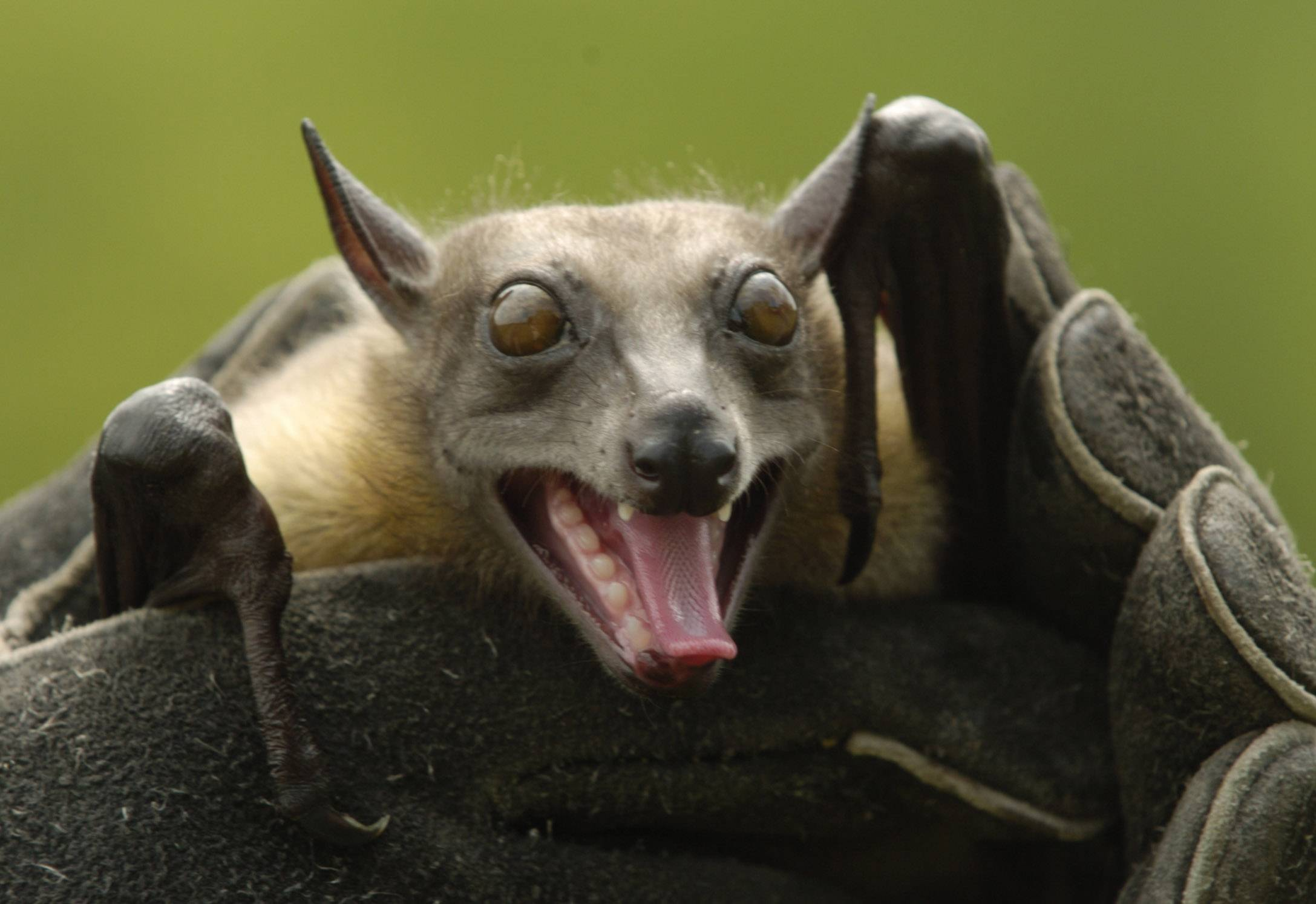 learn about bats oct  31 in waukegan