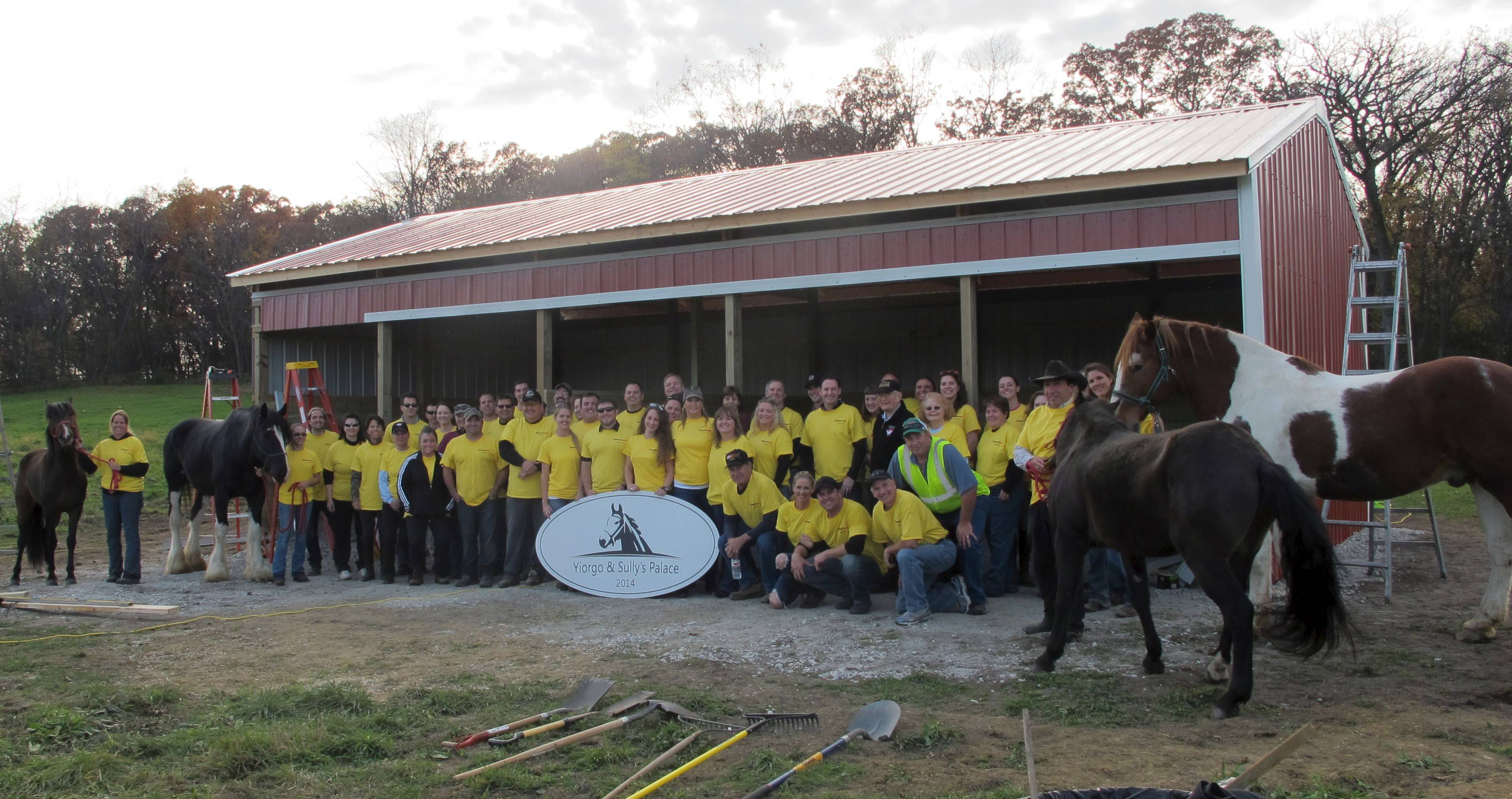 About 50 workers from various companies helped to build a shed at BraveHearts' Harvard facility to shelter up to 15 horses.