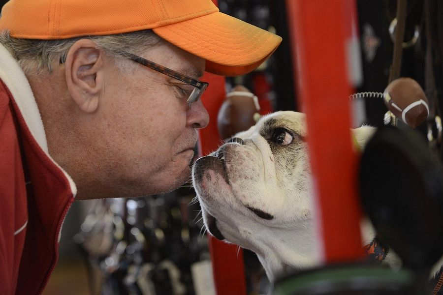 Scott Rogers, of North Aurora, goes chin to chin with Baby, a 7-year-old bulldog at the Smooch a Pooch booth Sunday during the Chicago Pet Show at the Kane County Fairgrounds. More than 150 pet-related companies and organization were at the event. Baby is an adoptable rescue dog with adoptaBull English bulldog Rescue of Chicago.