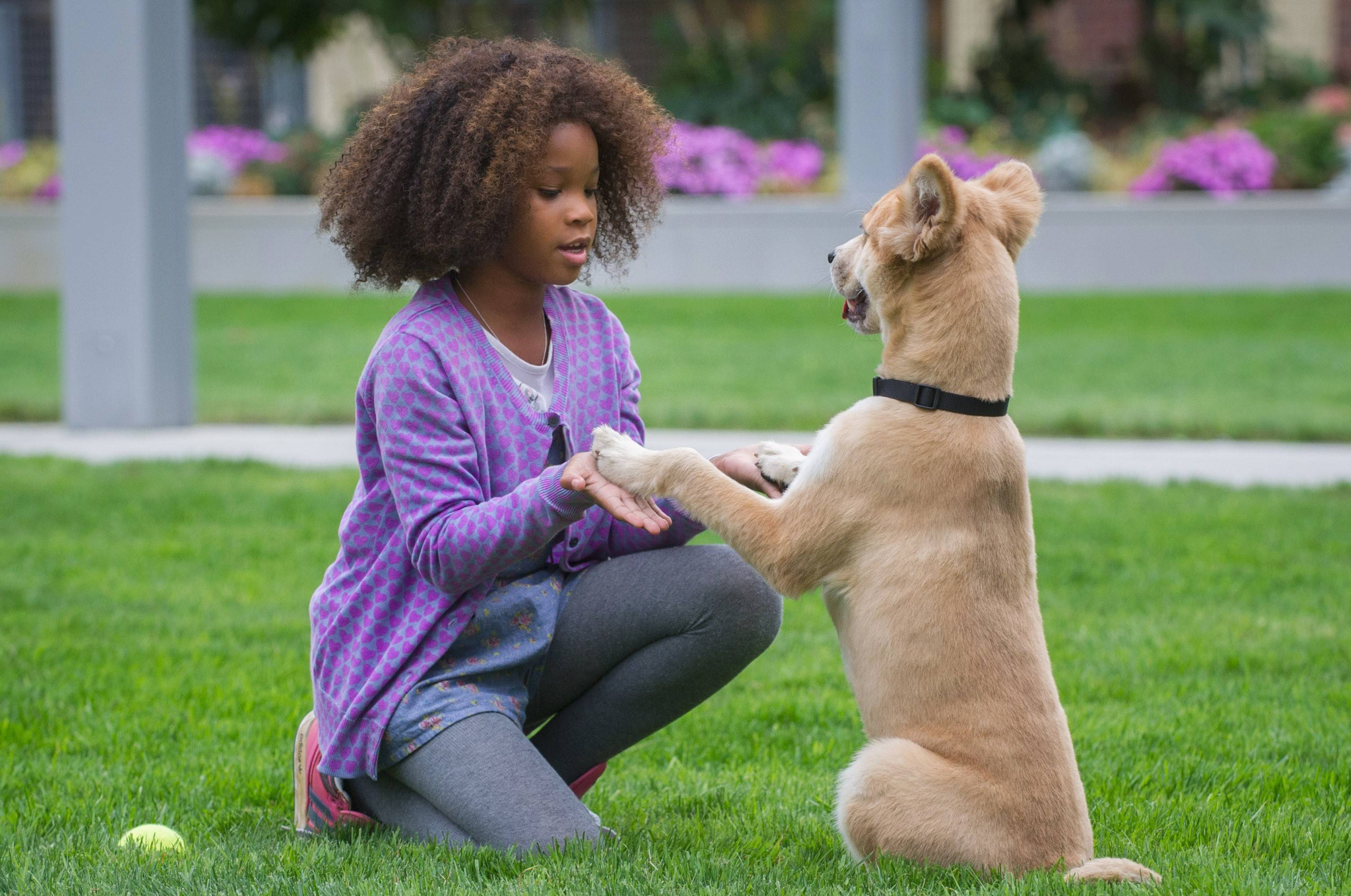 "Animal trainer William Berloni trained the dog Marti to star as Sandy in the new 2014 Columbia Pictures film version of ""Annie"" staring Quvenzhané Wallis."
