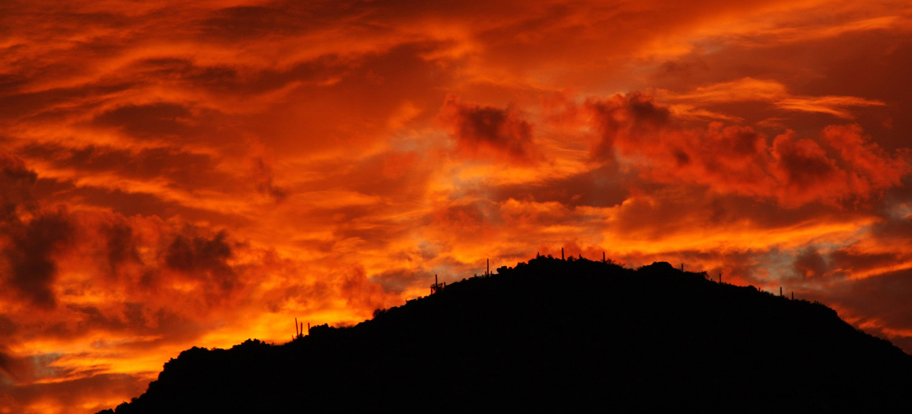 The saguaro cactus stand tall along the edge of a mountain in Tucson Mountain Park as the sky was ablaze in Tuscon, Arizona on November 14.