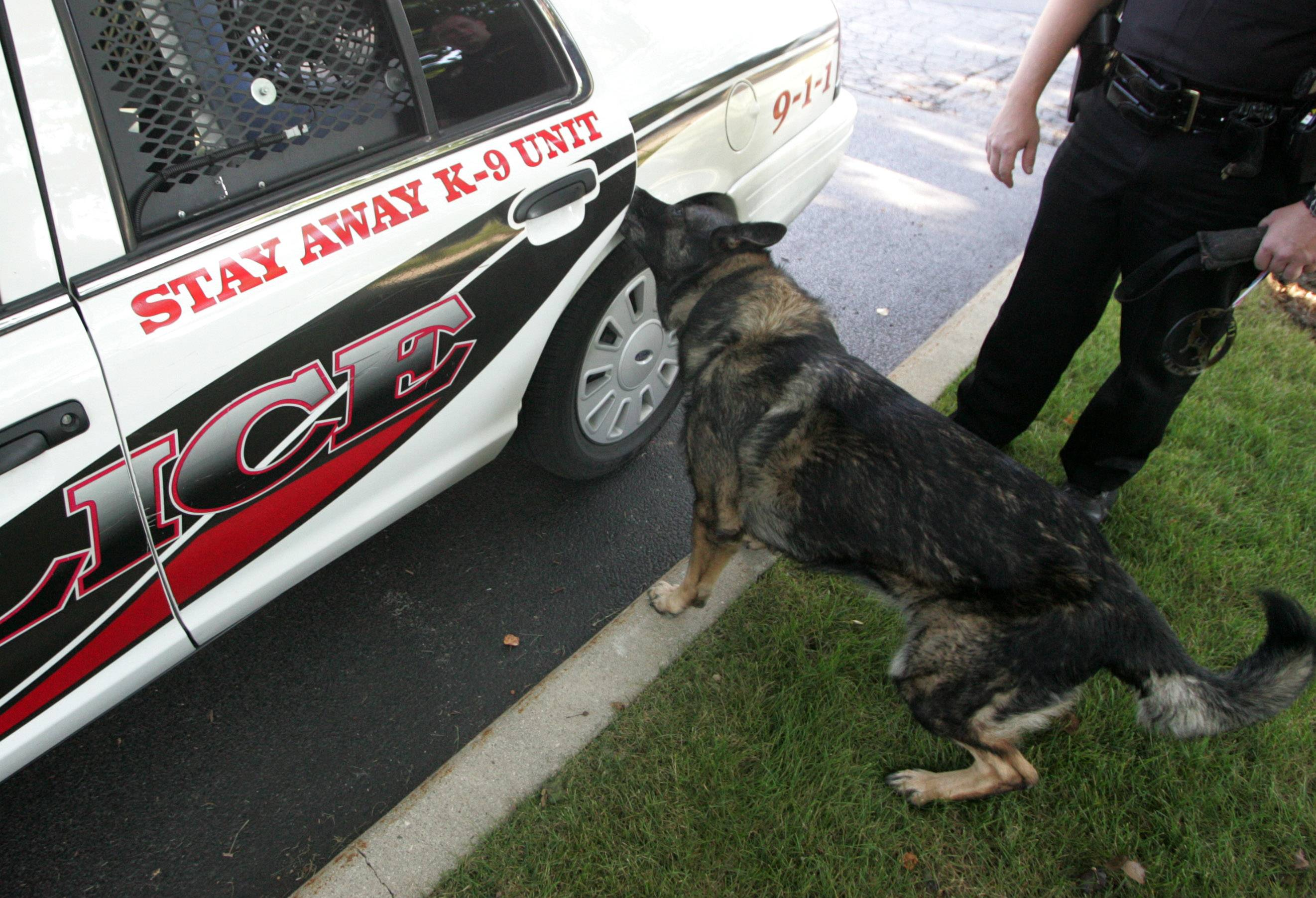Mundelein police are considering adding a dog to the force. Here, the Wauconda Police Department's former dog, Maxx, opens a car door in 2011. Maxx retired this year.