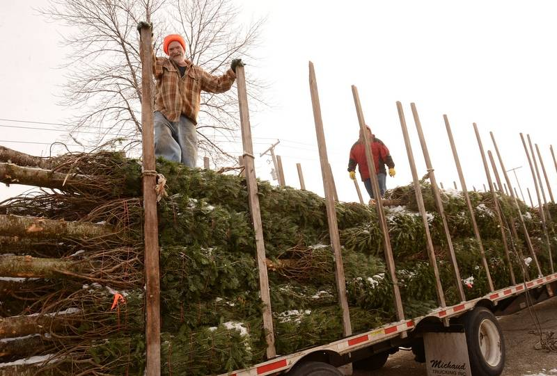 dan johnson from paul bunyan tree farm takes breather while unloading more than 300 christmas trees - Sales On Christmas Trees