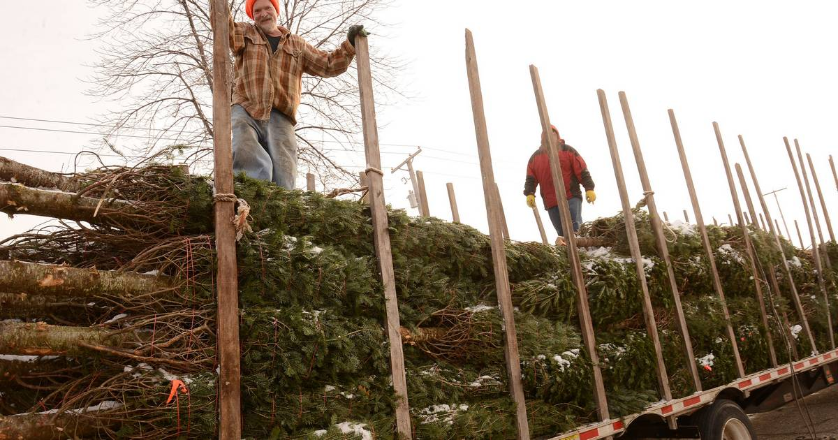 Vacant Lake Zurich parking ready for Christmas tree sales
