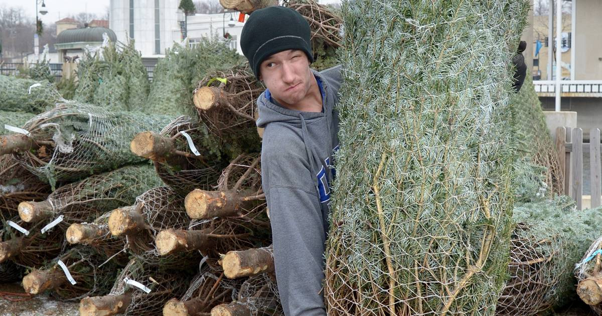 Swan's Christmas Trees opens in 5 locations