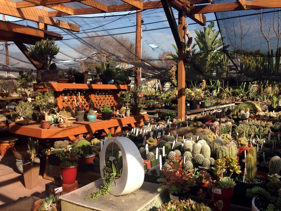 The California Cactus Center specializes in drought tolerant succulents and cacti.
