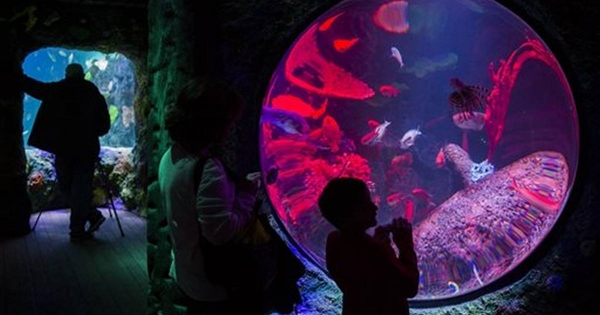 Preview week ahead of Great Lakes Crossing aquarium opening