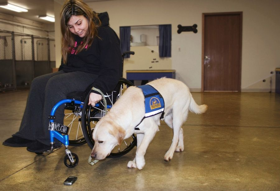 Teaching her new dog to pick up a dropped phone is just one of the 40 commands Danielle Austin and her new dog learn during two weeks of training with Canine Companions for Independence in Ohio. Austin, who lives in Carol Stream, soon will learn how to have her dog pull her wheelchair through the slush, snow and ice back home.
