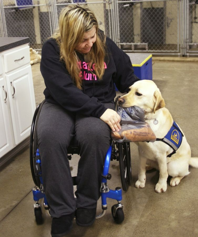 This companion dog helps Danielle Austin of Carol Stream during two weeks of training with Canine Companions for Independence in Ohio. Among the tasks they are working on will be pulling her wheelchair through the suburban snow.