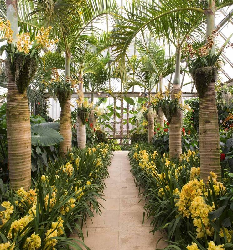Chicago Botanic Garden show focuses on orchids