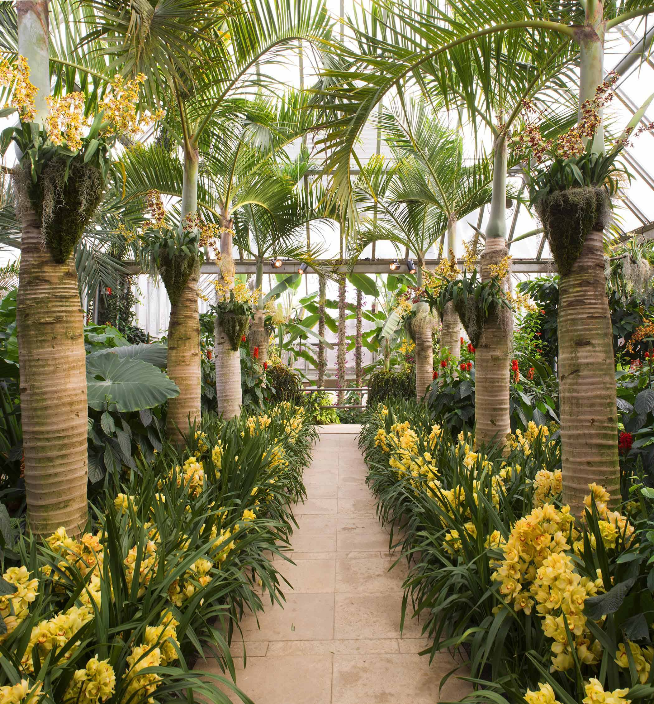 Bon The Palm Allée In The Tropical Greenhouse, Supporting Clusters Of Vibrant  Orchids, Frames An