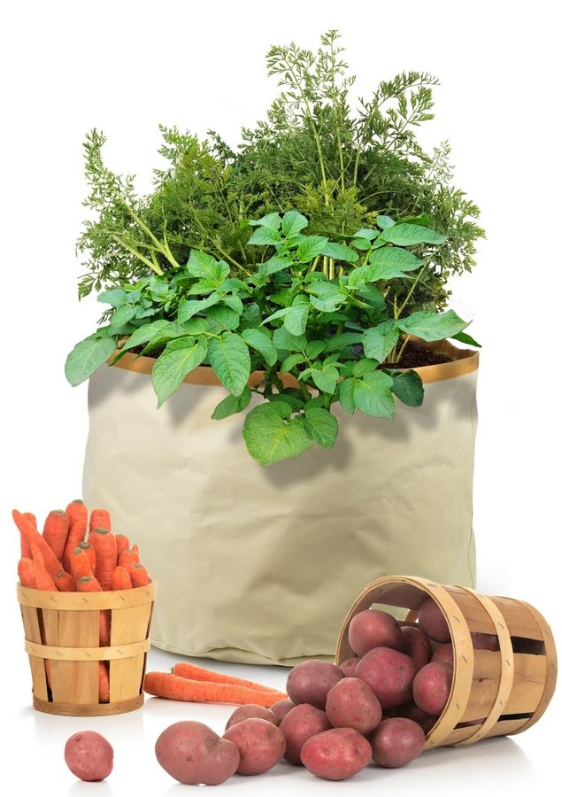 Grow it: Gardeners with limited yard space or uncooperative soil can enjoy potatoes, carrots, parsnips and other roots with the Homegrown Gourmet line of Harvest Grow Bags. Besides the root bag, pictured, there's one for herbs and greens, one for tomatoes and an all-purpose bag. The fabric bags are sturdy and reusable. $20 (shown). Available now at online retailers.