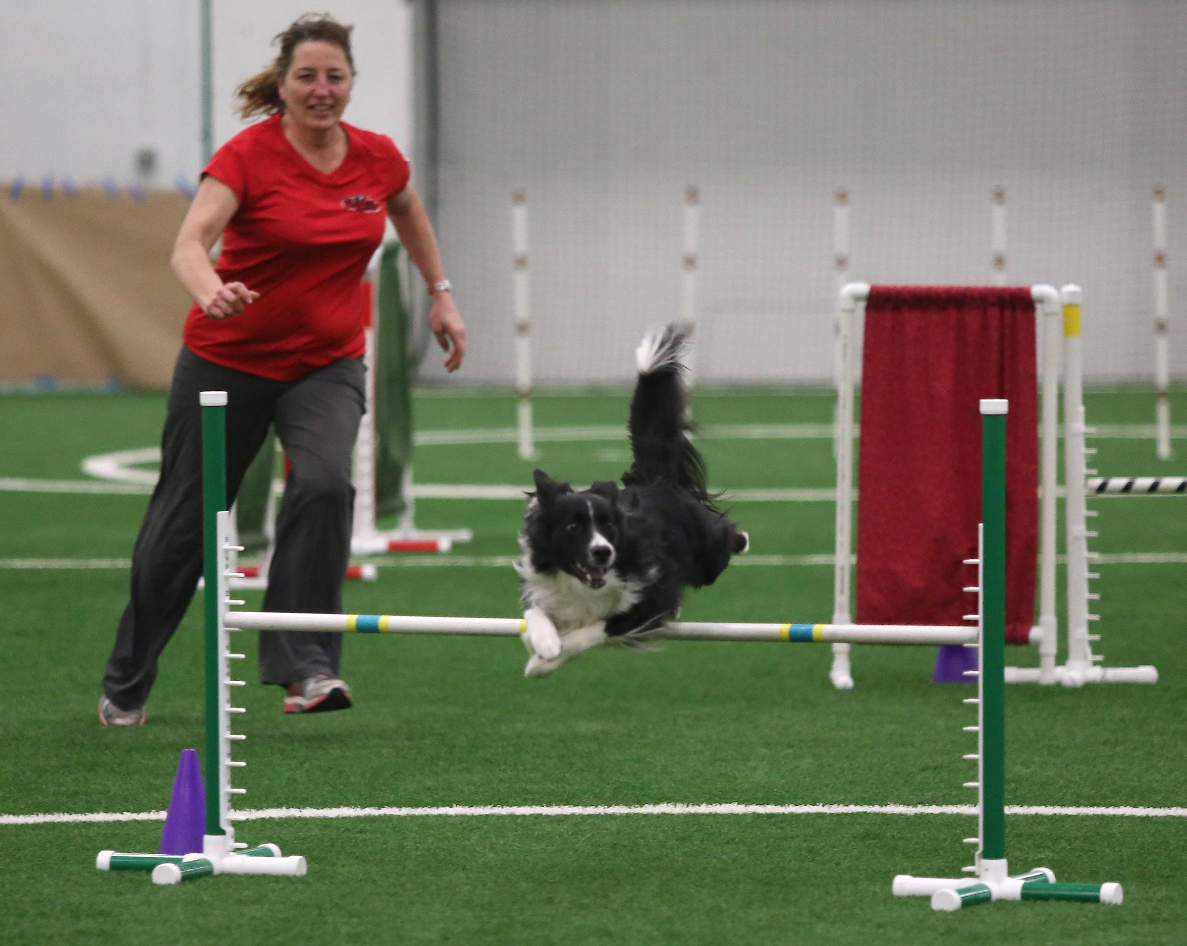 Des Plaines resident Sue Rolek and her border collie, Ignite, run through the obstacle course during the Wisconsin-Illinois Agility Group competition Sunday at the Libertyville Sports Complex. Hundreds of dogs and their handlers competed on the obstacle courses to test obedience and skill.