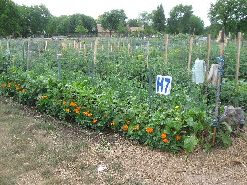 Glen Ellyn garden to bring veggies to local food pantry