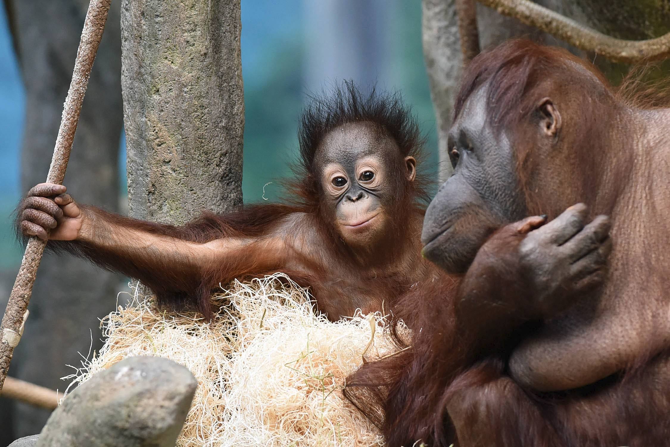 Brookfield Zoo Tickets  Save Up to 45 Off