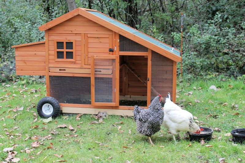 This chicken coop is part of the package when customers rent egg-laying hens from Urban Chicken Rentals of Wauconda. The chickens retire to the safety of their home every dusk, and the coop, which is on wheels and has no floor, can be moved around to fertilize the grass.