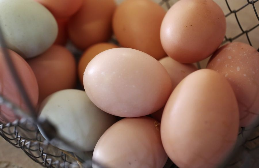 Not quite as flashy as dyed Easter eggs, these fresh eggs from Wauconda businesswoman Kellie Burke's Urban Chicken Rentals come in brown, green, blue, pink -- a variety of colors. None of her hens lays white eggs.