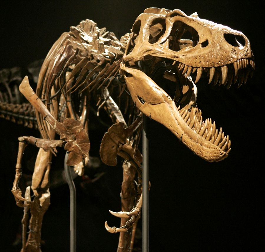 The Smithsonian Institution will soon release a scan of a Tyrannosaurus Rex skeleton that can be printed in 3-D at home.