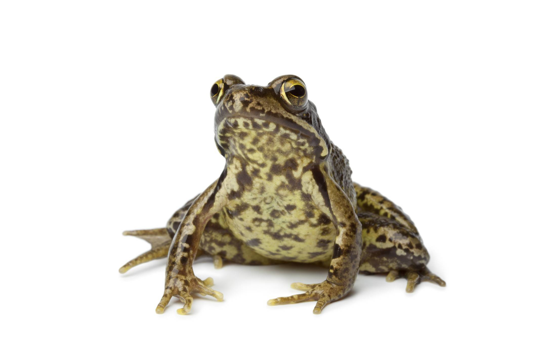 Learn to identify various types of frogs at the Creek Bend Nature Center in St. Charles.